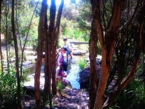 Ian Potter Garden 3