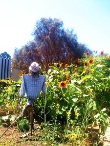 Ian Potter Garden 4