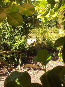 Secret Garden @ the Convent Gardens